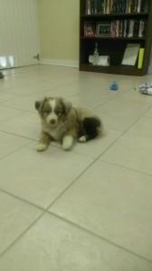 abbie and brett's puppy
